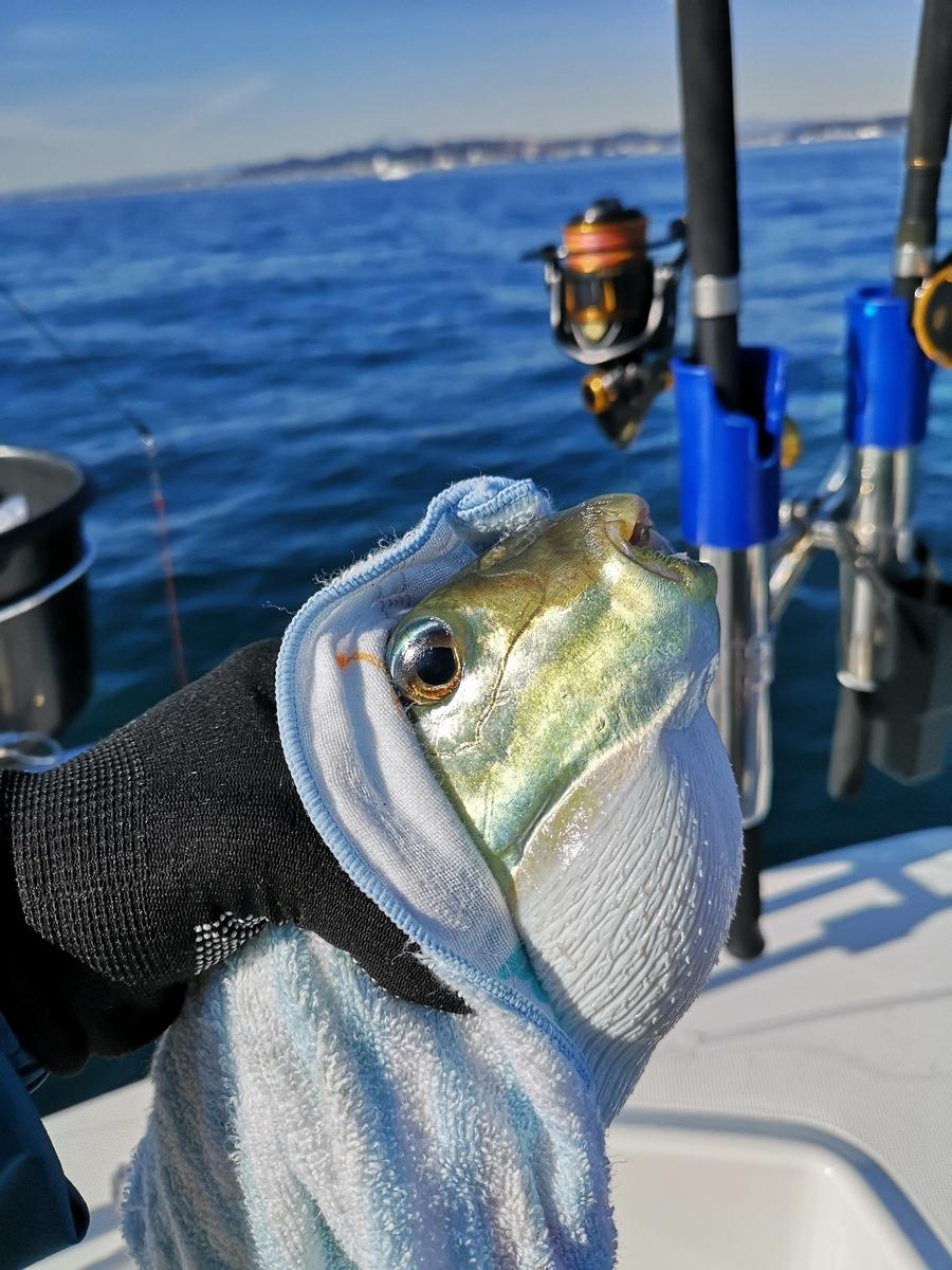f:id:go_fishing2017:20210202181845j:plain