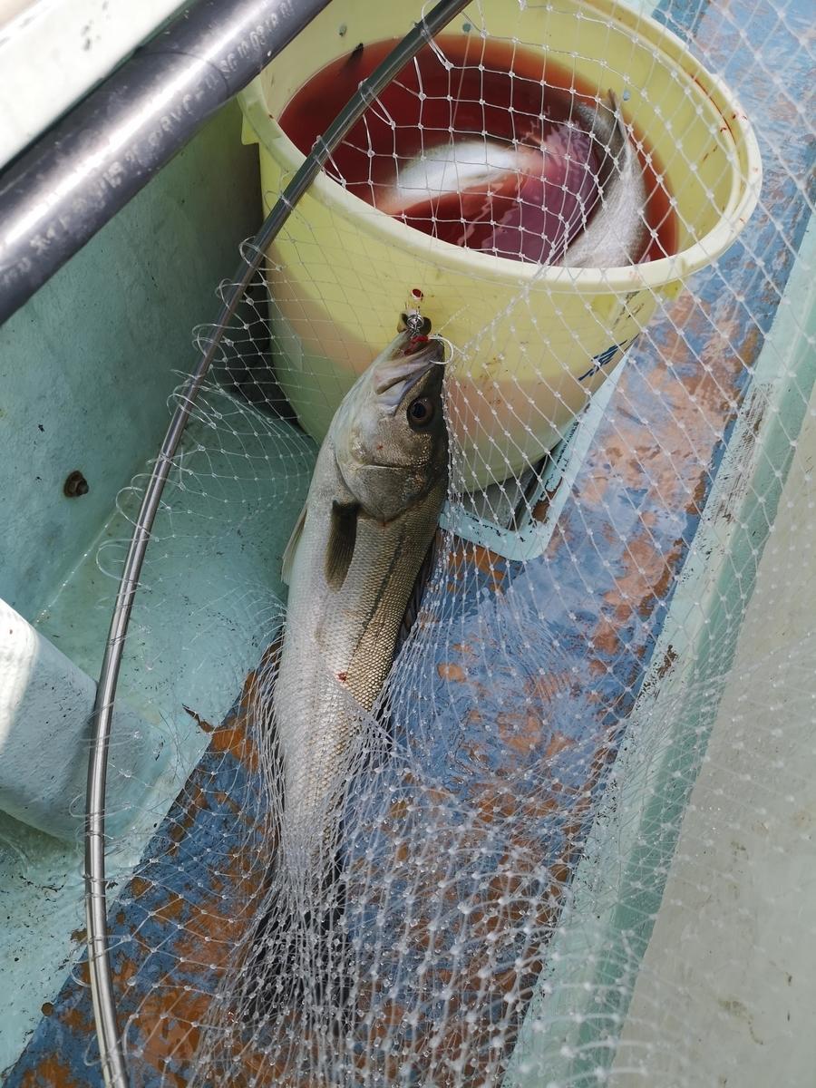 f:id:go_fishing2017:20210419140013j:plain