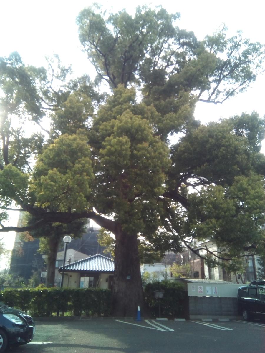 f:id:goddesstree:20190409213538j:plain