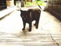[猫][黒猫]