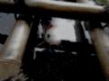 [鯉][魚][竹][水]