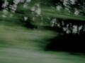 [車][道路][草][木]