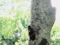 [木][蝉][葉]
