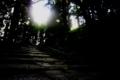[木][木洩れ日][階段]