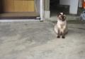 [ねこ][ネコ][猫]