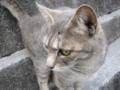 [ねこ][猫][ネコ]