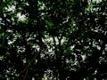 [木][緑][葉]