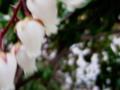 [花][木][葉]
