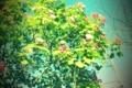 [花][木]