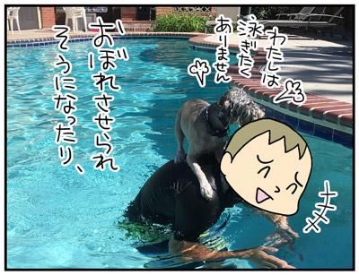 シュヌードル(シュナプー)は泳ぎがきらい?!