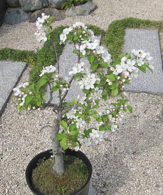 f:id:gokurakuboen:20170421114952j:plain