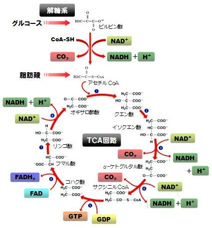 f:id:gokurakujiclinic:20171025004855j:plain
