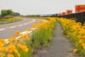 京都新聞写真コンテスト 黄色い花道