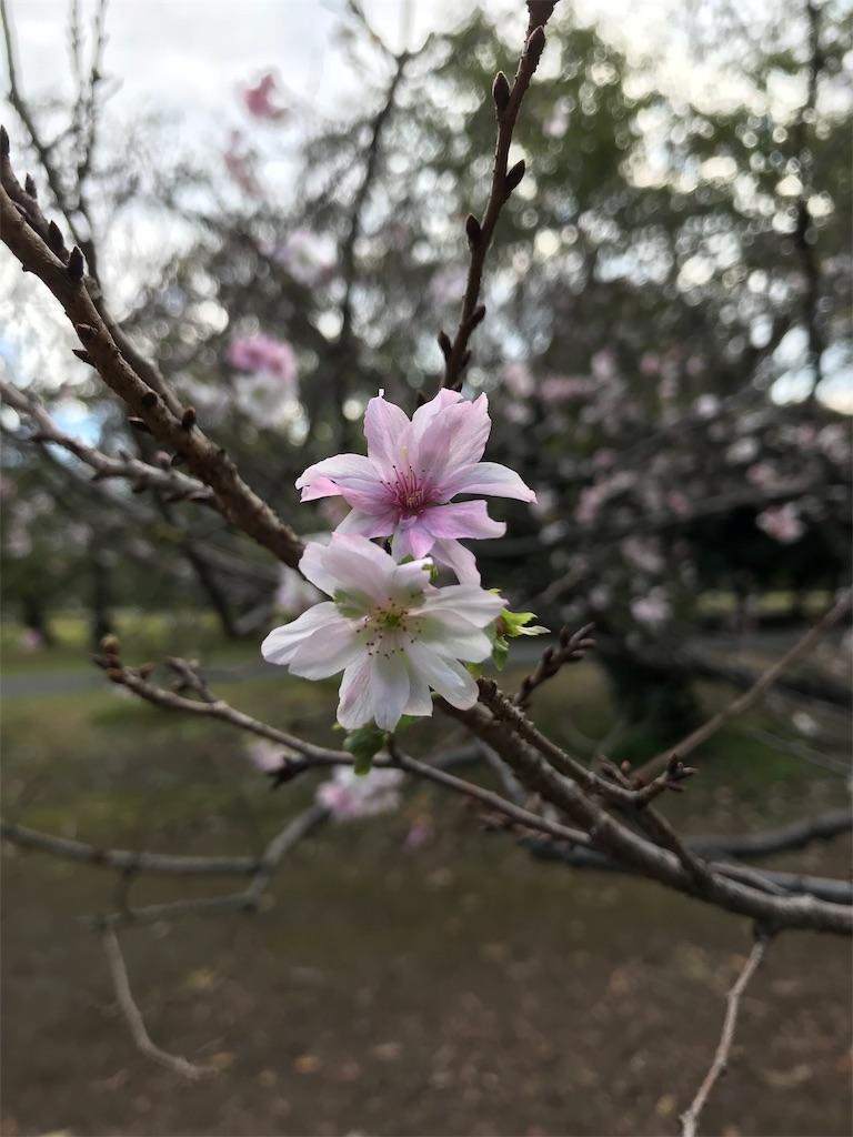 f:id:golbe_onsen:20181029200038j:image