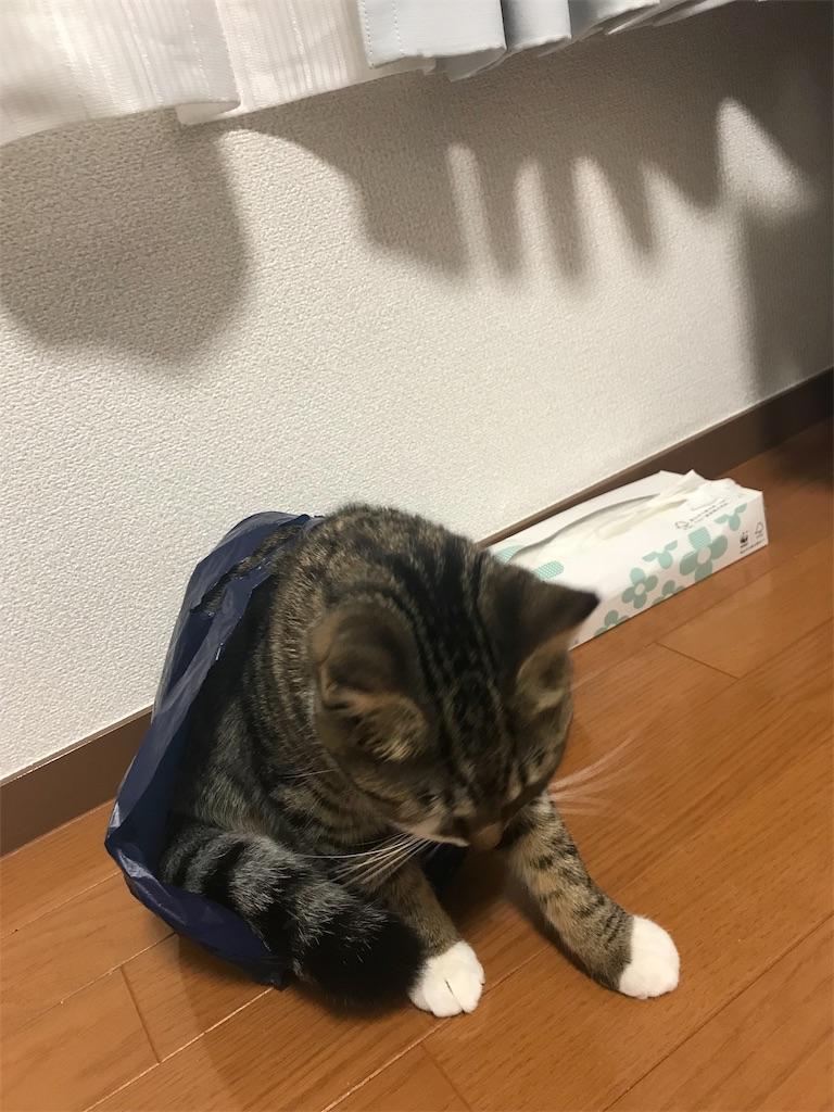 f:id:golbe_onsen:20181218231813j:image