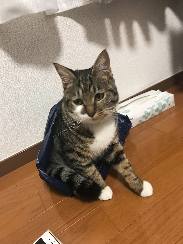 f:id:golbe_onsen:20181218231826j:image