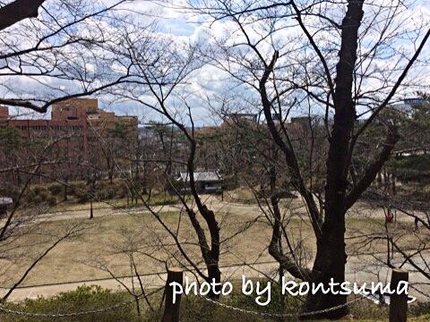千秋公園 桜
