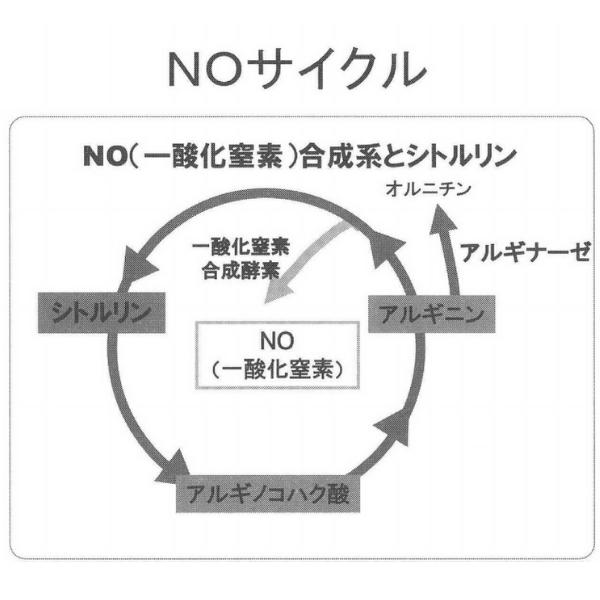 NOサイクル