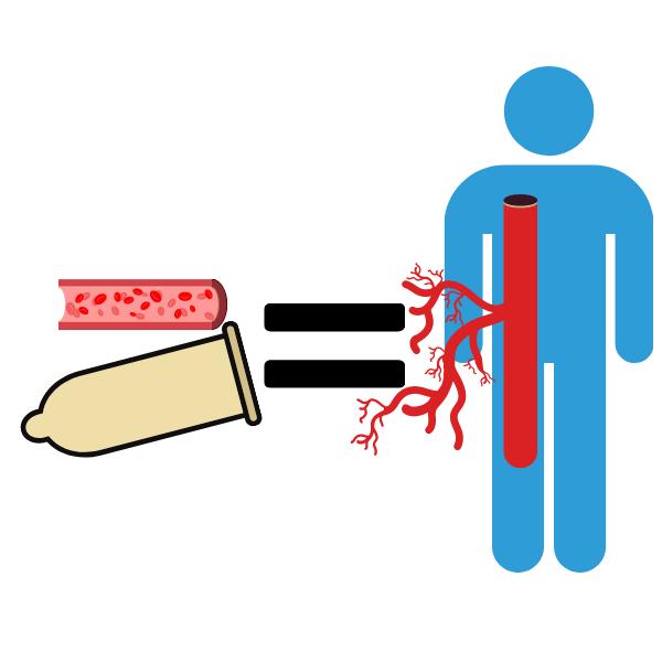 ペニスの血管=全身の血管