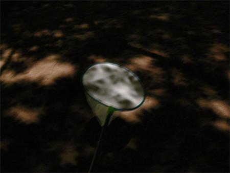 f:id:goldhead:20080303172151j:image