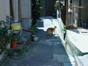 f:id:goldhead:20081212171536j:image