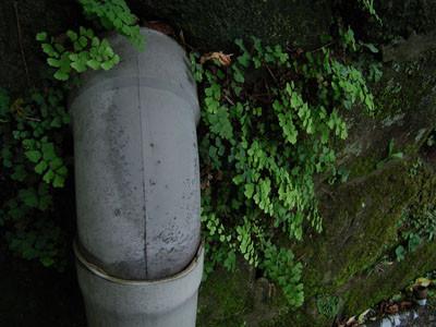 f:id:goldhead:20090711161608j:image:left