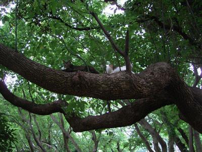 f:id:goldhead:20090711161612j:image:left