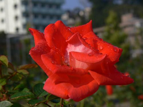 f:id:goldhead:20091019085113j:image