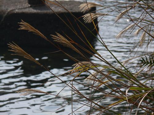f:id:goldhead:20091019085116j:image