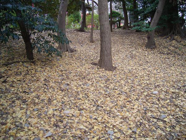 f:id:goldhead:20091215125013j:image