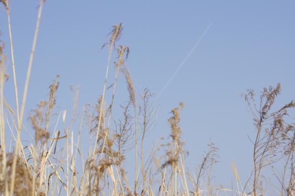 f:id:goldhead:20110228012911j:image