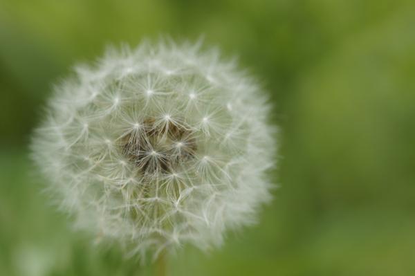 f:id:goldhead:20110506134615j:image