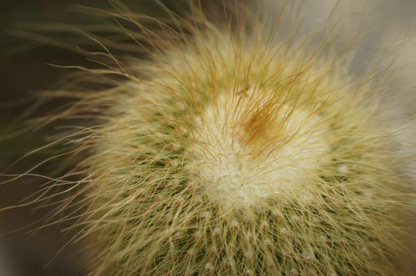 f:id:goldhead:20110506134616j:image