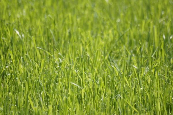 f:id:goldhead:20110509124900j:image