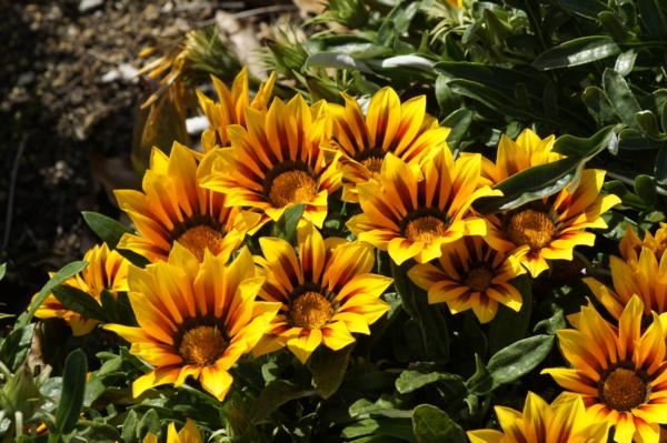 f:id:goldhead:20110518010109j:image