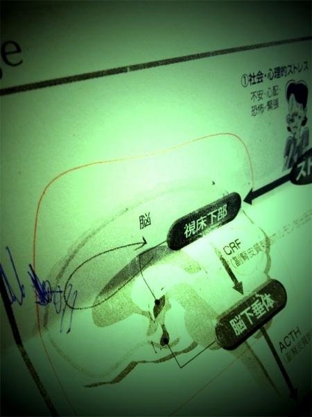 f:id:goldhead:20111203233717j:image:w300