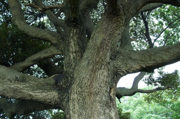 f:id:goldhead:20120619122913j:image