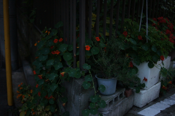 f:id:goldhead:20120619122918j:image