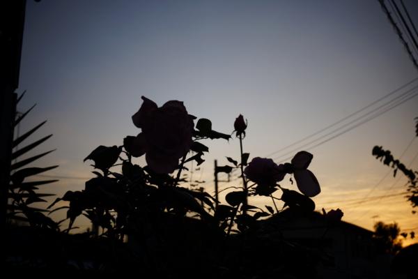 f:id:goldhead:20121125214533j:image