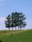 CMで使用された5本の木