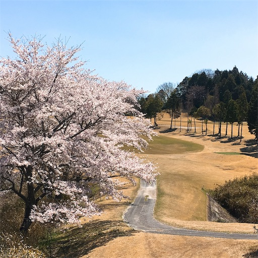 f:id:golf8:20190414233325j:image