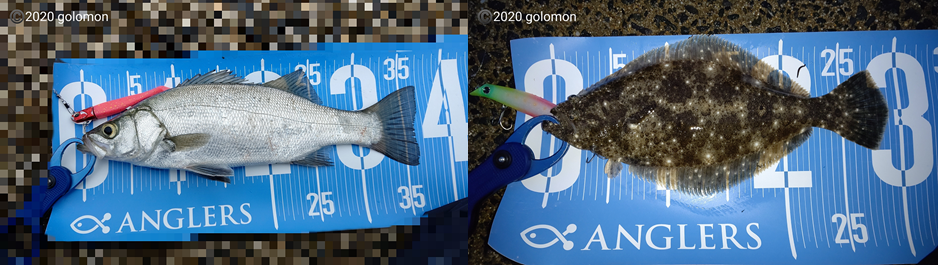 f:id:golomon:20201230183206p:plain