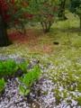 京都新聞写真コンテスト 散華