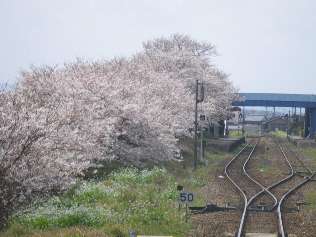 f:id:gomashio-oyaji:20200520190317j:plain