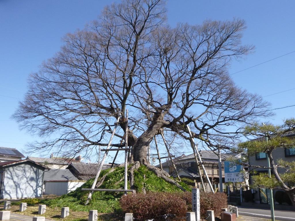 f:id:gomashio-oyaji:20200524150945j:plain