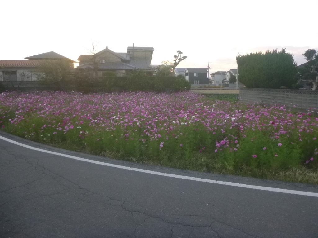 f:id:gomashio-oyaji:20200608215949j:plain