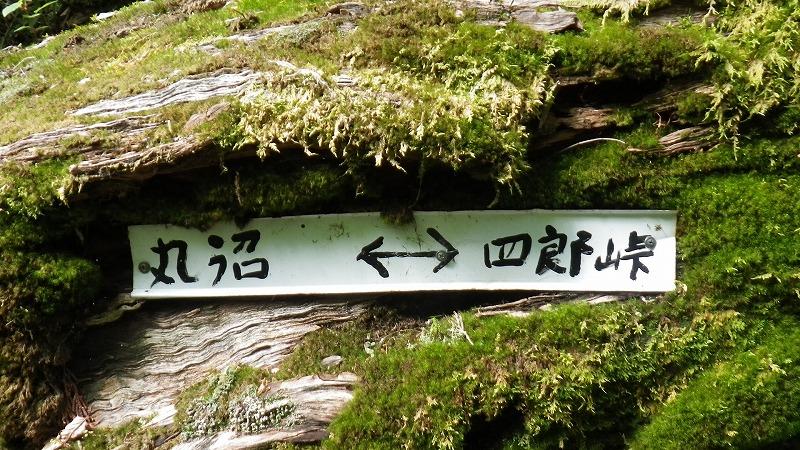 f:id:goniyoyo:20120729173336j:image