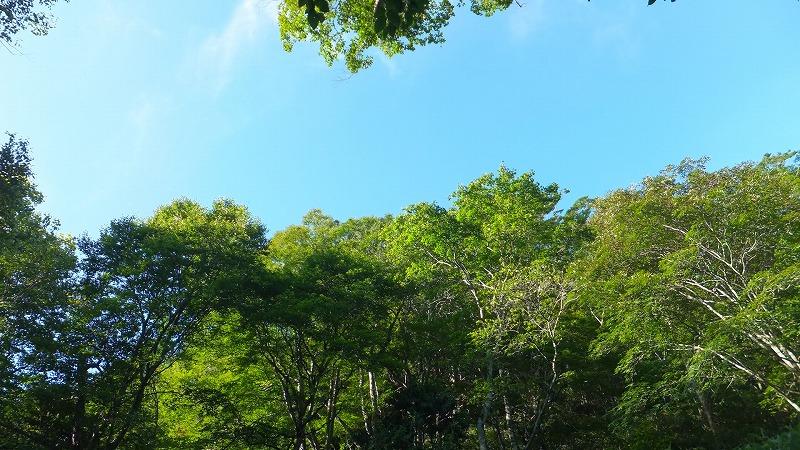 f:id:goniyoyo:20120916042614j:image