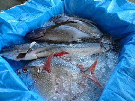 勝浦漁港の魚