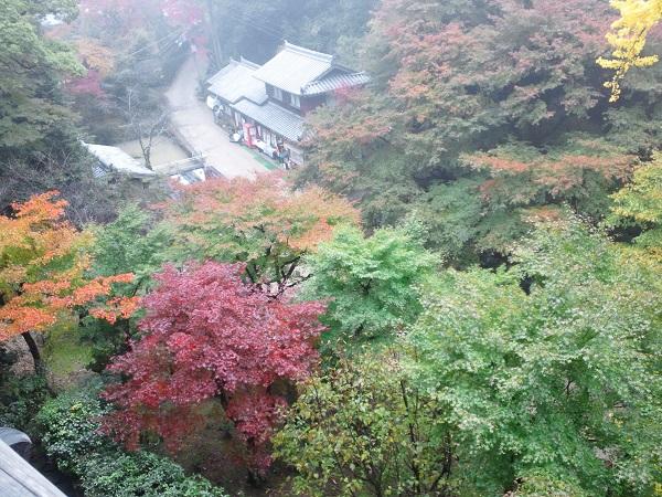書寫山の紅葉